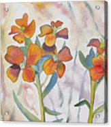 Watercolor - Wallflower Wildflowers Acrylic Print