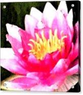 Watercolor Waterlily Acrylic Print