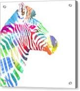 Watercolor Zebra Acrylic Print