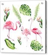Watercolour Flamingo Family Acrylic Print