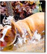 Waterdog Acrylic Print