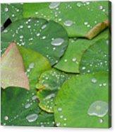 Waterdrops On Lotus Leaves Acrylic Print by Silke Magino