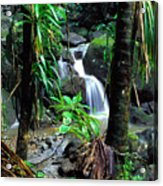 Waterfall El Yunque National Forest Mirror Image Acrylic Print