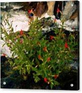 Waterfall Flowers Acrylic Print