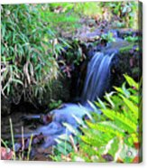 Waterfall In The Fern Garden Acrylic Print