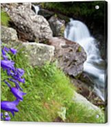 Waterfalls And Bluebells Acrylic Print