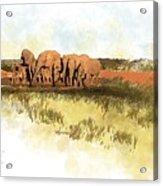 Waterhole - Addo National Park  Acrylic Print
