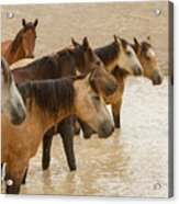 Waterhole Band Acrylic Print