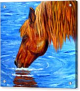 Watering Hole Horse Painting Acrylic Print