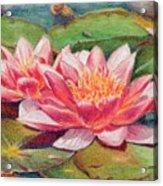 Waterlillies Acrylic Print