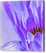 Waterlily Dreams Acrylic Print