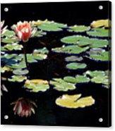 Waterlily Panorama Acrylic Print