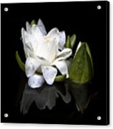 Waterlily  Reflection Acrylic Print