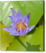 Waterlily Shadow Of Perfection Acrylic Print