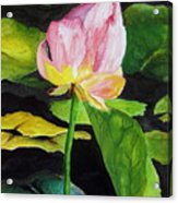 Waterlily Watercolor Acrylic Print
