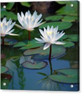 Waterlilys Acrylic Print