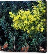 Wattyl - Wild Flower Of Australia Acrylic Print