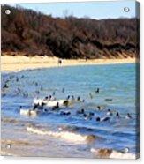 Waves Of Ducks Acrylic Print