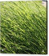 Waving Grass Acrylic Print