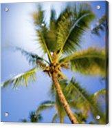 Waving Palm Acrylic Print