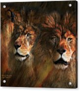 Way Of The Lion Acrylic Print
