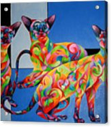 We Are Siamese If You Please Acrylic Print