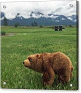 We Saw A Bear Acrylic Print