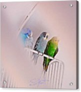 We Three Birds Acrylic Print