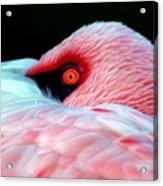 Wearing Pink Acrylic Print