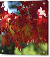 Wearing Red For Fall Acrylic Print