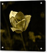Weathered Golden Tulip Acrylic Print