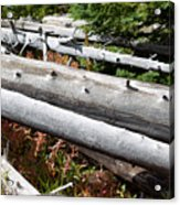 Weathered Trees Fallen Down Within Yellowstone National Park Acrylic Print