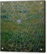 Web After The Storm Acrylic Print