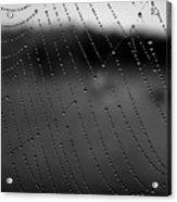 Web And Water 3 Acrylic Print