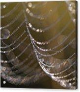 Web Sparkle Acrylic Print