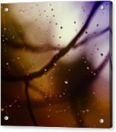 Web With Droplets Acrylic Print