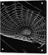 Webbed Acrylic Print