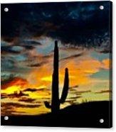 Webs Of Twilight Acrylic Print