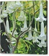 Wedding Bells Acrylic Print