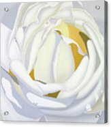 Wedding Rose Acrylic Print