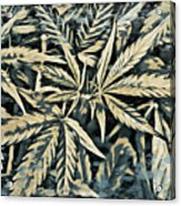 Weed Abstracts Four Acrylic Print