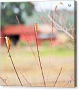 Weeds 037 Acrylic Print