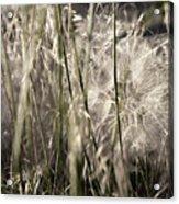 Weeds #1 - 310061 Acrylic Print