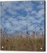 Weeds And Dappled Sky Acrylic Print