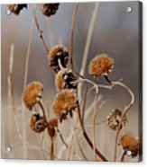 Weeds Are Pretty Too Acrylic Print