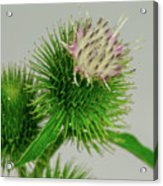 Weeds Can Be Beautiful Too Acrylic Print