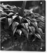 Weeds Can Be Beautiful Acrylic Print