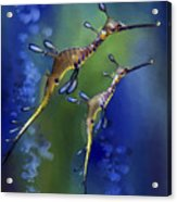 Weedy Sea Dragon Acrylic Print