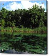 Weeki Wachee River Acrylic Print