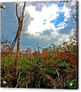 Weeks Bay Swamp Acrylic Print
